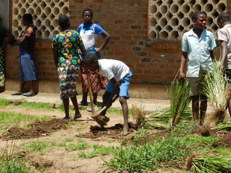 planting vetivar