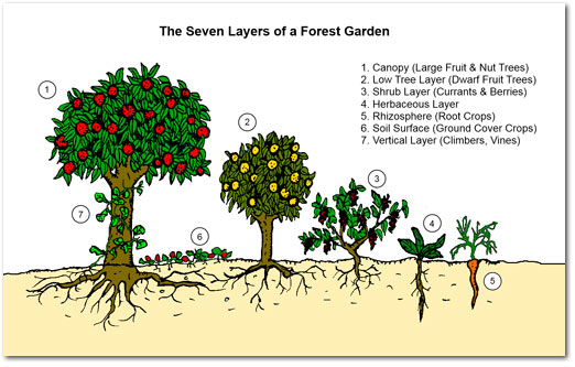 food_forest_layers color
